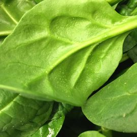 delicious looking spinach that we use at Fresh